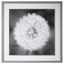 Uttermost Framed Prints Dandelion Seedhead Framed Print - Item Number: 33711