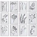 Uttermost Framed Prints Contemporary Botanicals Framed Prints, S/12 - Item Number: 33713