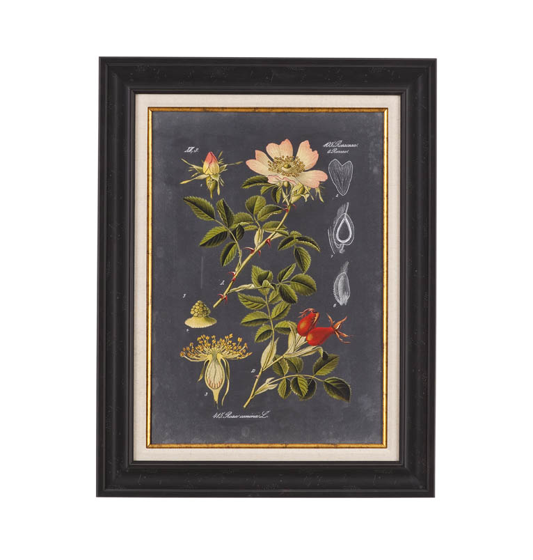 Belgian Luxe Midnight Botanical I by Bassett Mirror at Alison Craig Home Furnishings