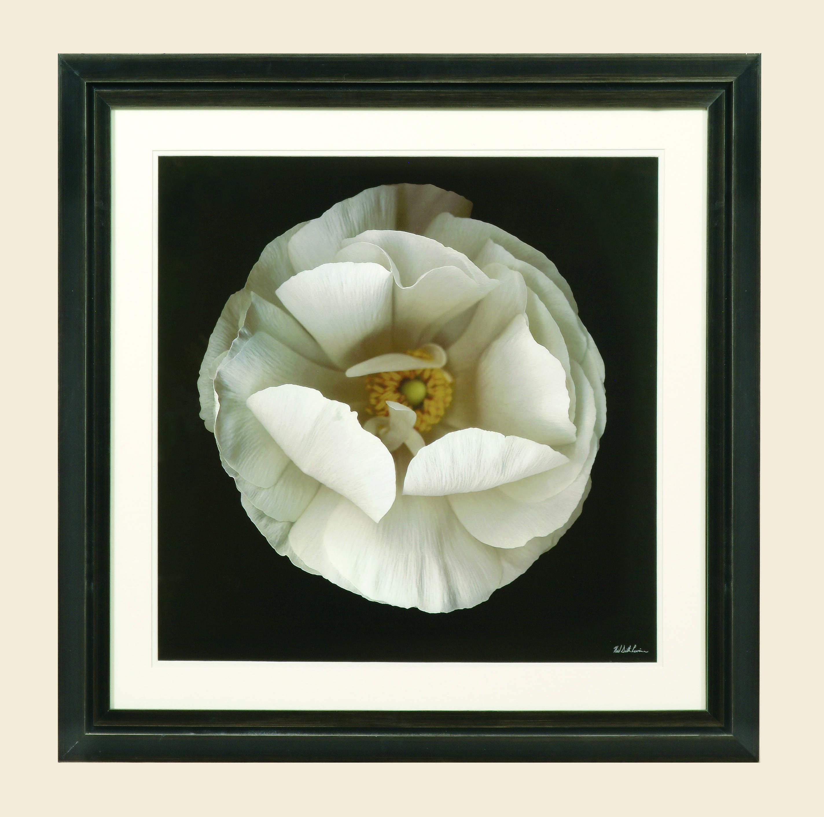 Hollywood Glam Folded Ranunculus by Bassett Mirror at Lapeer Furniture & Mattress Center