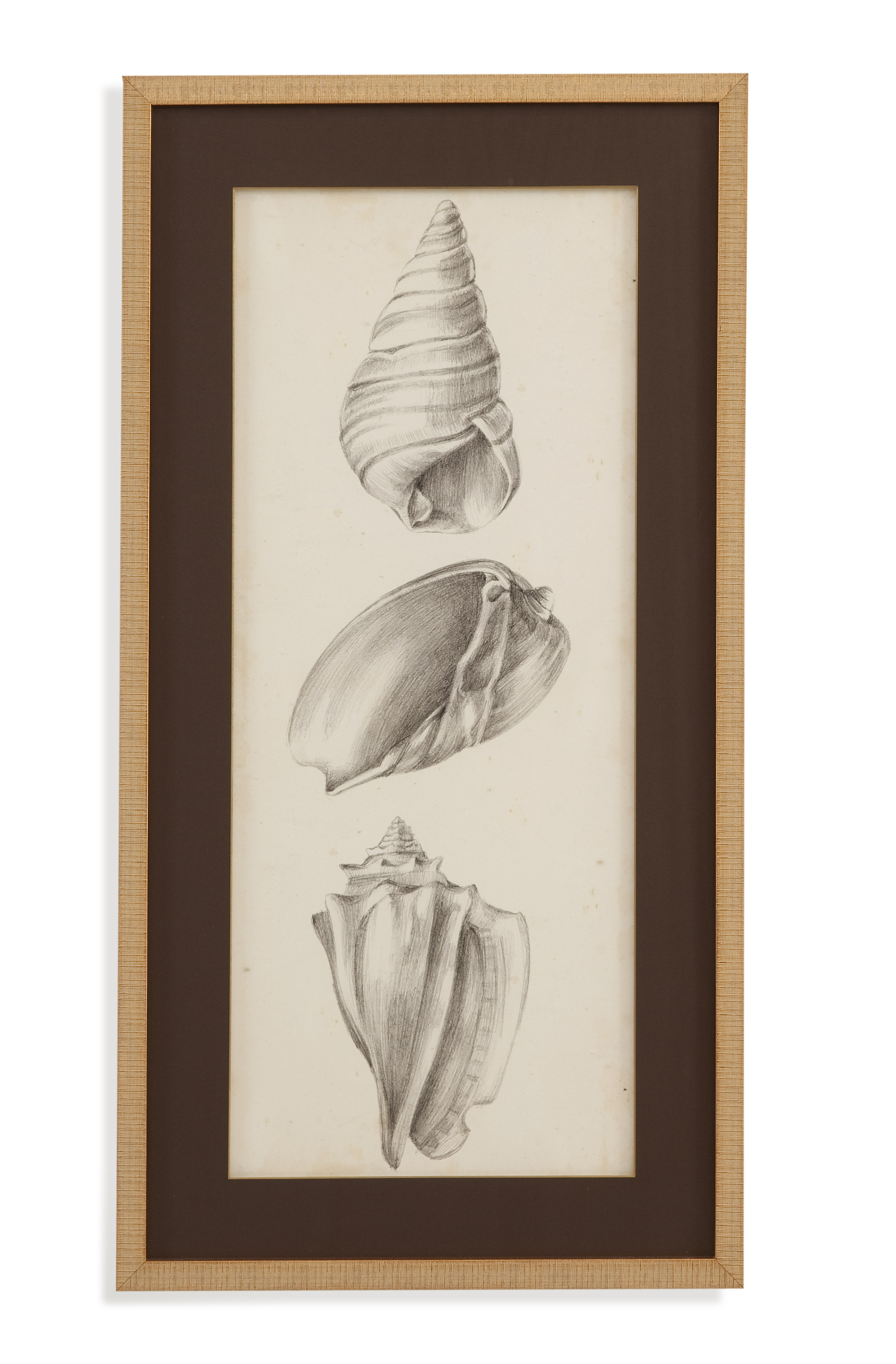 Home Accents Antique Shell Study II by Bassett Mirror at Alison Craig Home Furnishings