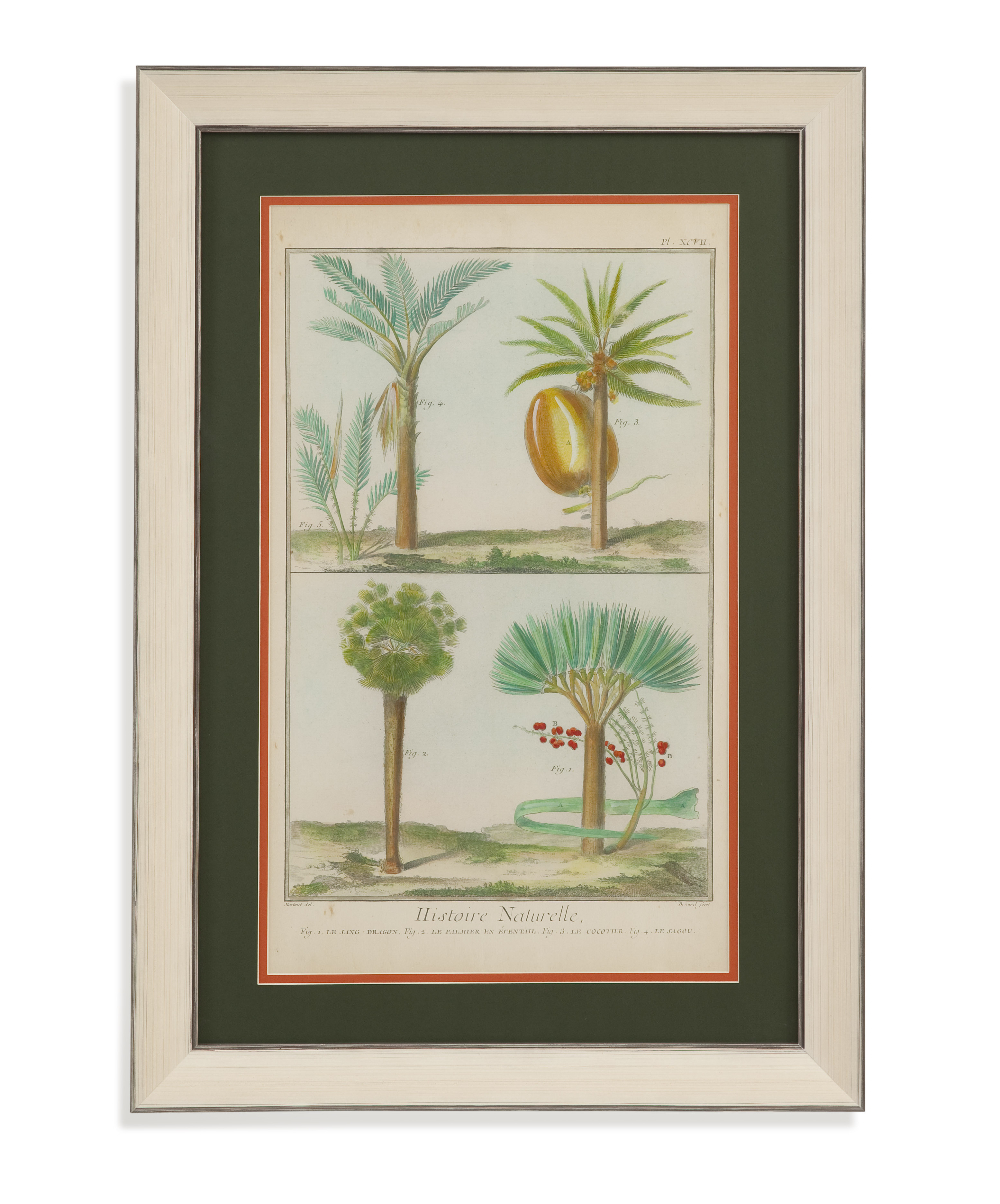 Home Accents Histoire Naturelle Tropicals I by Bassett Mirror at Alison Craig Home Furnishings