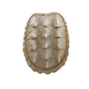 Shell I