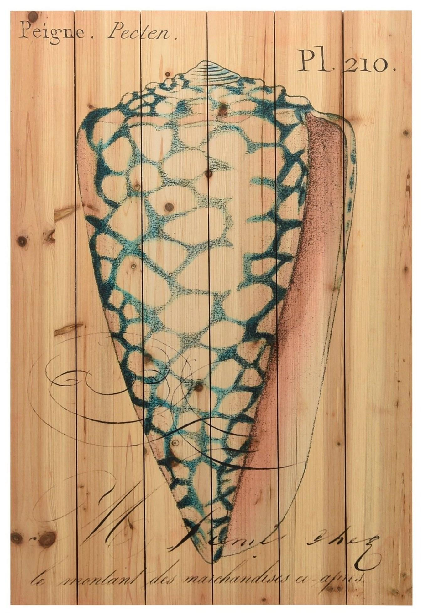 Accessories Seashell Ephemera 4 by Empire Art Direct at HomeWorld Furniture