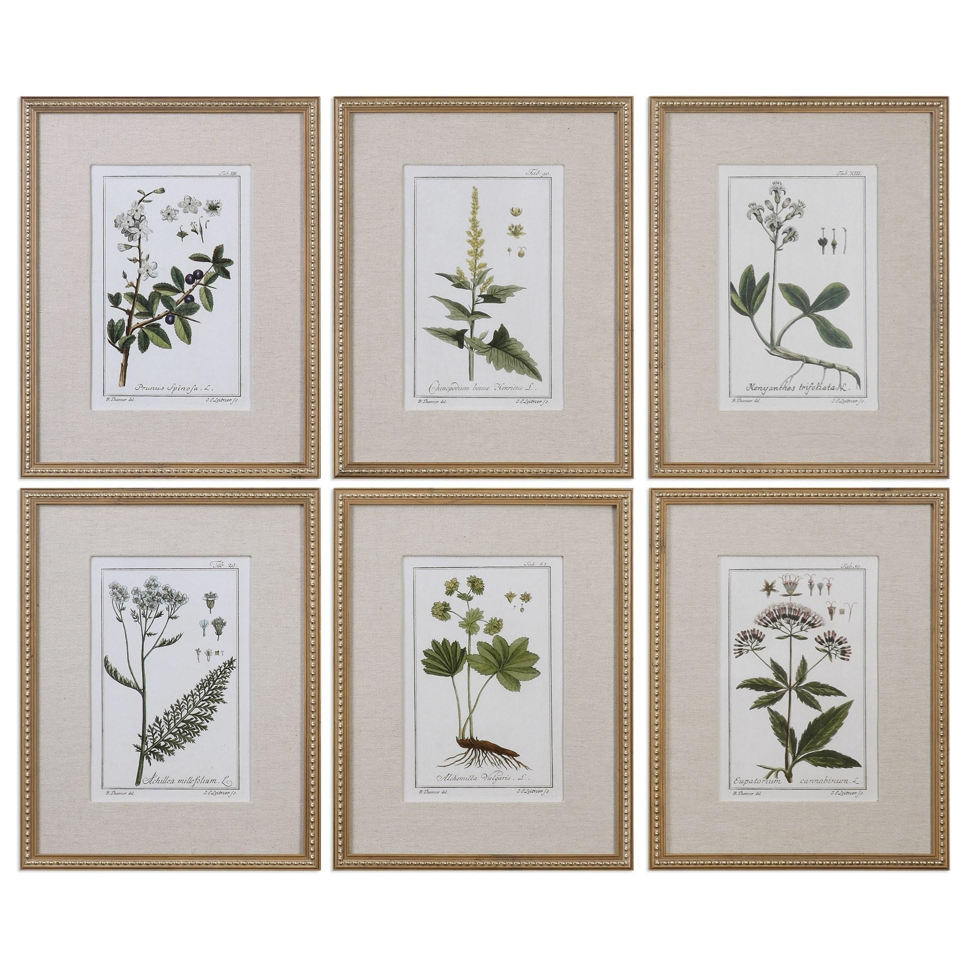 Framed Prints Green Floral Botanical Study (Set of 6) by Uttermost at Upper Room Home Furnishings