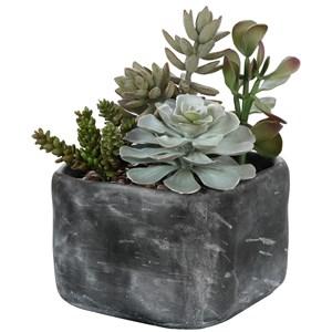 Alverio Desert Garden Succulents
