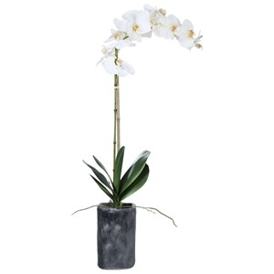 Eponine White Orchid