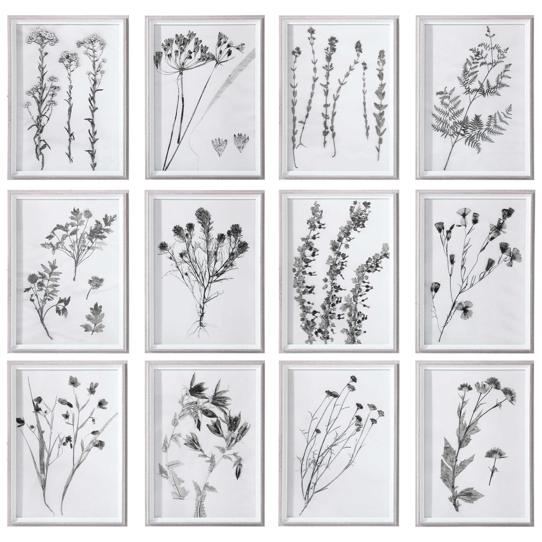 Framed Prints Contemporary Botanicals Framed Prints, S/12 by Uttermost at Mueller Furniture